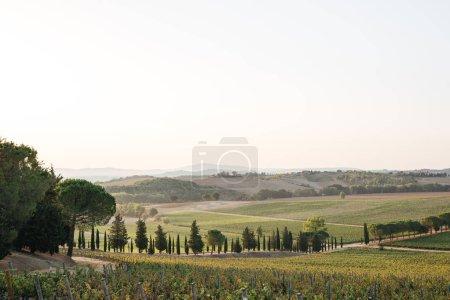 Foto de Vista panorámica de campos de Tuscany hermosos con árboles verdes y cielo azul, Italia - Imagen libre de derechos