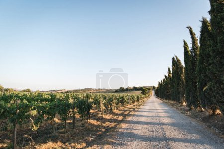 Photo for Scenic view of beautiful Tuscany vineyard and empty road, Italy - Royalty Free Image