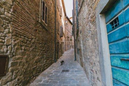 urban scene of narrow Tuscany city street and cat