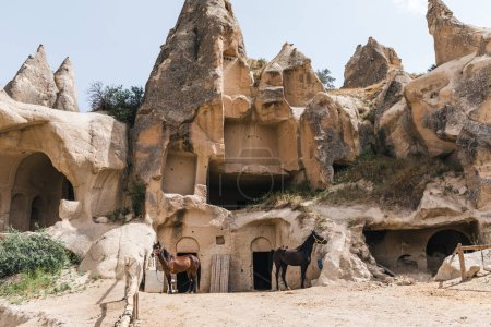 Photo for Horses near caves in rocks at goreme national park, cappadocia, turkey - Royalty Free Image