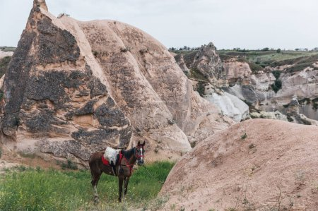 Foto de Pie de hermoso caballo en el pasto cerca de Turquía de pintoresca roca formaciones, Capadocia, - Imagen libre de derechos