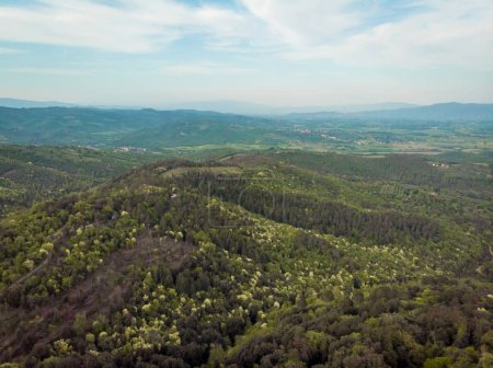 aerial view of beautiful hills with trees in arezzo province, Italy
