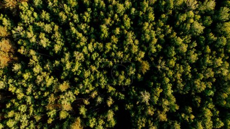 Photo pour Vue aérienne de la forêt verte dans la province d'arezzo, Italie - image libre de droit
