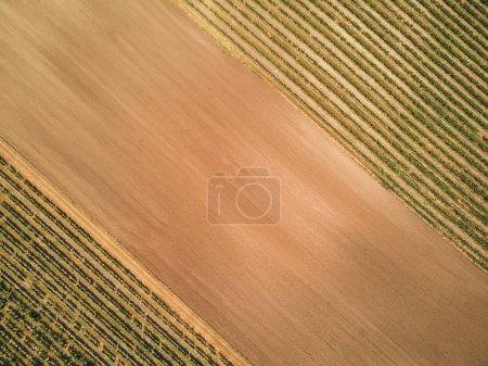 Foto de Vista aérea de verdes viñedos y suelo marrón, República Checa - Imagen libre de derechos