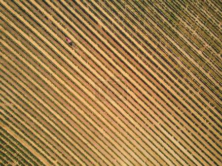 Foto de Vista aérea de hermosas filas de viñedos, República Checa - Imagen libre de derechos