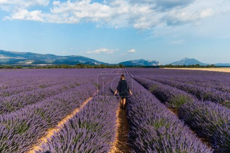 Photo for Back view of girl walking between rows of blooming lavender flowers in provence, france - Royalty Free Image