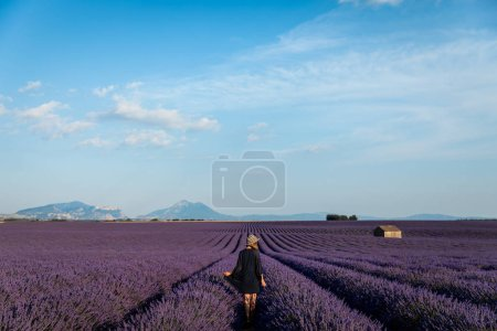 Photo for Back view of girl walking on picturesque lavender field in provence, france - Royalty Free Image