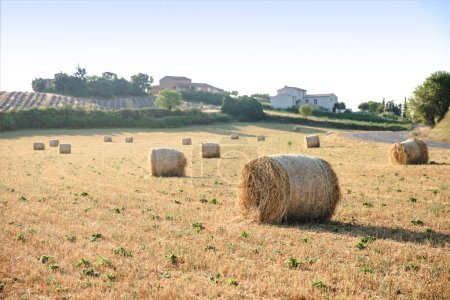 Photo for Hay bales on beautiful agricultural field and farm in provence, france - Royalty Free Image