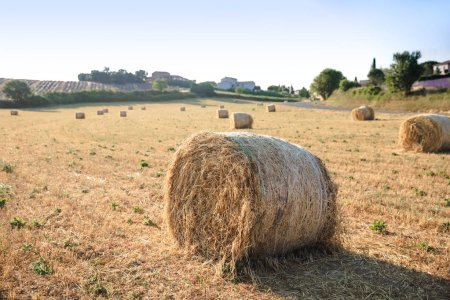Photo for Hay bales on beautiful agricultural field in provence, france - Royalty Free Image