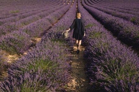 back view of girl holding hat and walking on lavender field, provence, france