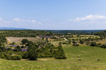 Photo for Beautiful green plants, hay bales on field and farm buildings in provence, france - Royalty Free Image