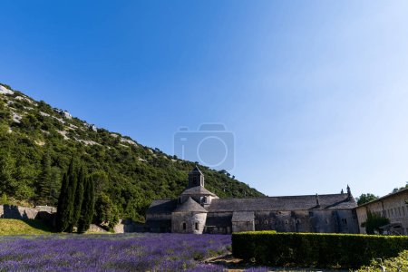 Photo for Historic Abbey of Senanque and beautiful lavender flowers, Gordes, Luberon, Provence - Royalty Free Image