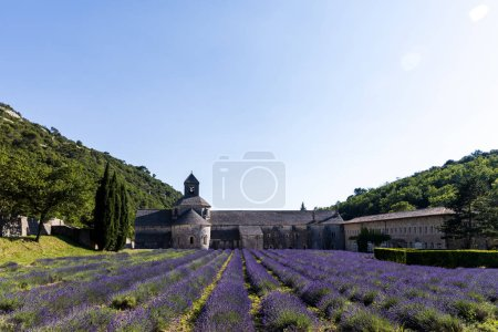 Photo for Beautiful historic Abbey of Senanque and lavender flowers, Gordes, Luberon, Provence - Royalty Free Image
