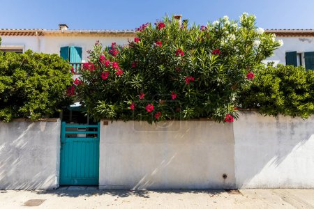 white wall, turquoise gate and beautiful blooming flowers near traditional houses in provence, france