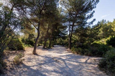 Photo pour Beaux arbres verts et les buissons poussant dans la forêt à une journée ensoleillée, provence, france - image libre de droit