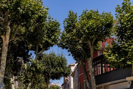 Photo for Low angle view of beautiful green trees in traditional french town in provence - Royalty Free Image