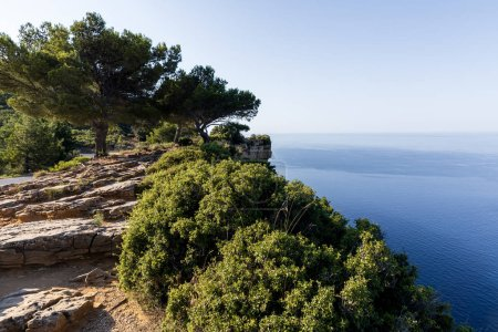 Photo for Beautiful green trees on rocky mountain and tranquil seascape in provence, france - Royalty Free Image