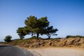 """Постер, картина, фотообои """"пустой асфальт и красивых зеленых деревьев в Солнечный день, Прованс, Франция"""""""
