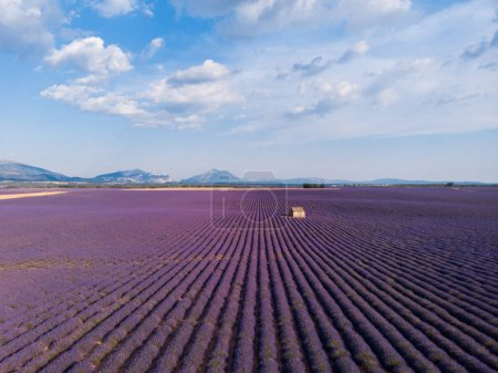 Photo for Aerial view of farm on beautiful blooming lavender field in provence, france - Royalty Free Image