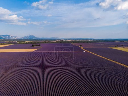 aerial view of picturesque lavender field and mountains in distance, provence, france