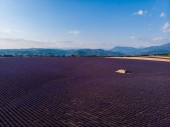 aerial view of beautiful cultivated lavender field, farm and mountains in distance, provence, france
