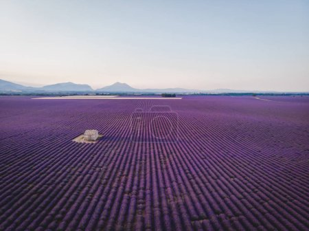 Photo for Aerial view of farm on beautiful lavender field, provence, france - Royalty Free Image