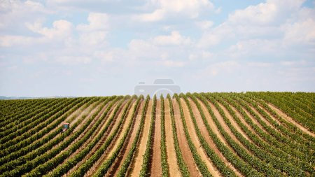 Photo for Tractor on agricultural field with rows of plants in Zajeci, Czech Republic - Royalty Free Image