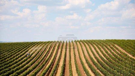 Photo pour Tracteur sur champ agricole avec rangées de plantes à Zajeci, République tchèque - image libre de droit