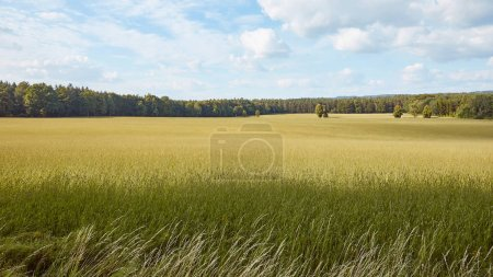 Photo for Green grass on field, trees and blue sky in Bad Schandau, Germany - Royalty Free Image