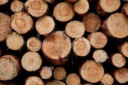 Photo pour Troncs d'arbres bruns coupés sur pilotis pour bois de chauffage - image libre de droit