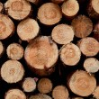 Brown cut tree trunks on pile for firewood...