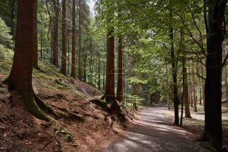 Photo for Pathway, hill and green trees in beautiful forest in Bastei, Germany - Royalty Free Image