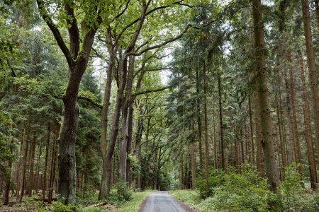 Photo pour Route et vert des arbres dans les forêts européennes à Bastei, Allemagne - image libre de droit