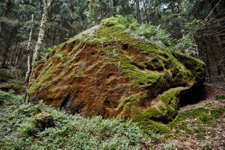 Photo pour Mousse sur pierre et arbres verts à Bastei, Allemagne - image libre de droit