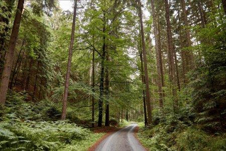 Photo pour Route, plantes et arbres verts dans la forêt européenne à Bastei, Allemagne - image libre de droit