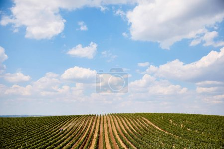 Photo for Blue cloudy sky above tractor on agricultural field with rows of plants in Zajeci, Czech Republic - Royalty Free Image