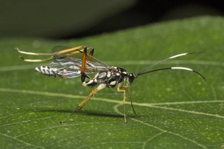 Close-up of wasps, Aarey milk colony Mumbai India...