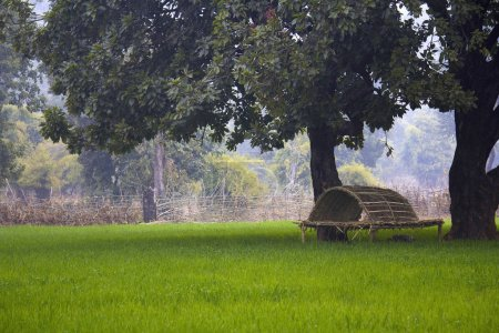 Fields and machan near bandhavgarh, Bandhavgarh Tiger Reserve outskirts, Madhya Pradesh, India