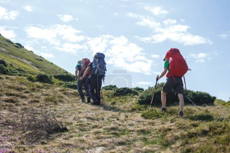 Photo for Back view of three hikers with backpacks and trekking poles walking in romanian highland - Royalty Free Image