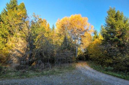 Foto de El sol ilumina camino forestal en otoño, azul cielo - Imagen libre de derechos