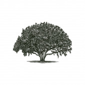 large and shady tree vector