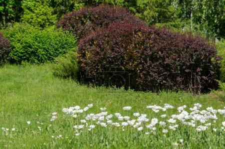 Foto de Paisaje urbano primavera. Parques de la ciudad. campo de hierba verde en el parque de la gran ciudad. hermosa mañana de luz en un parque público con campo de hierba verde - Imagen libre de derechos