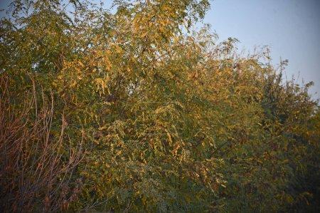 Photo pour Branches d'arbres avec des feuilles vertes sur fond bleu ciel - image libre de droit