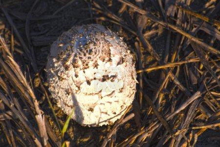 Photo pour Champignon bolet en forêt, vue rapprochée - image libre de droit
