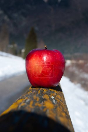 A whole red apple with petiole balanced on wooden fence