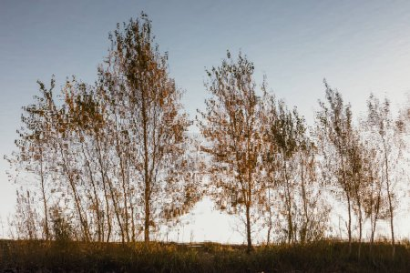 Photo for Reflection of birch trees in water - Royalty Free Image