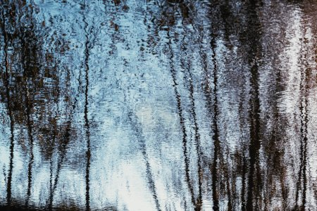 Photo for Reflection of birch trees in the blue water - Royalty Free Image