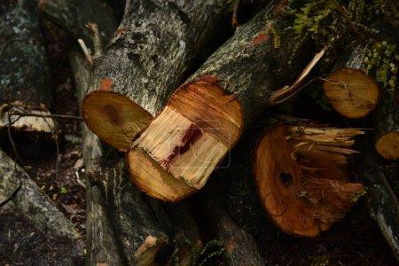 Photo pour Bûches brunes pour le bois de chauffage se ferment vers le haut - image libre de droit