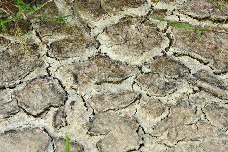 Photo pour Texture sèche de fond de sol - image libre de droit