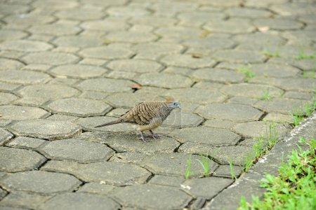 Foto de Small sparrow on gray path - Imagen libre de derechos